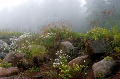 Foggy Northshore