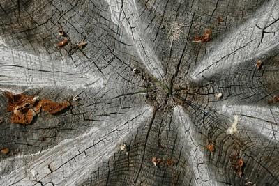 Nature's Sundial
