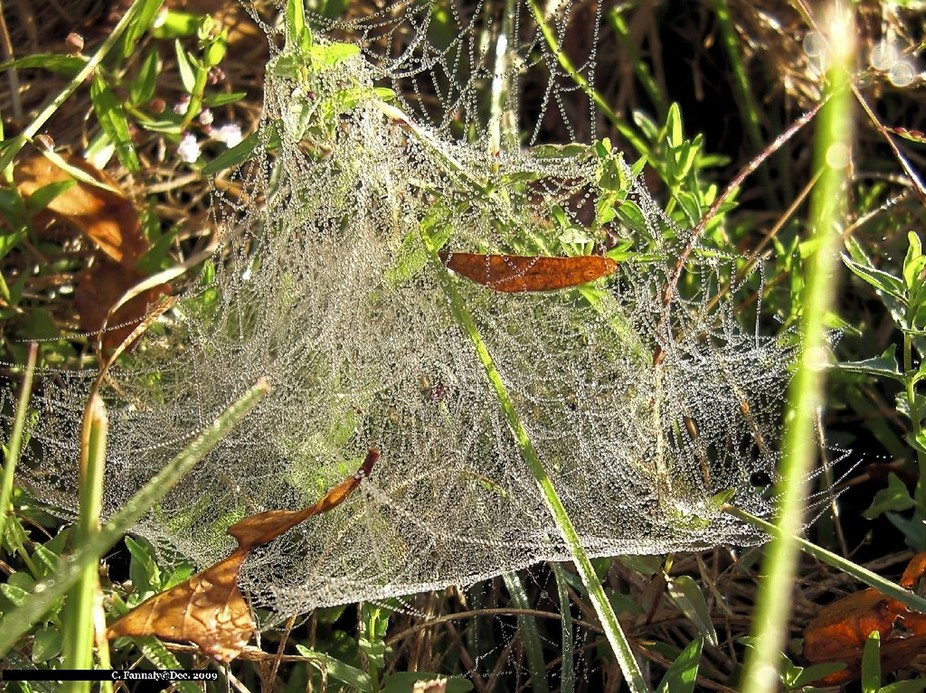 While taking pictures on Nov. 6, 2009, I noticed this beautiful web right at my feet.