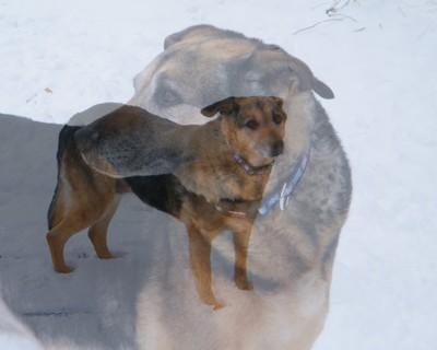 Daisy Loves Snow