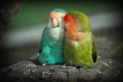 It Must Be Love, Love, Love...