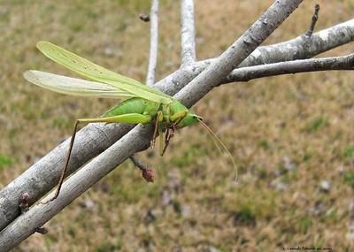 Death of a Grasshopper