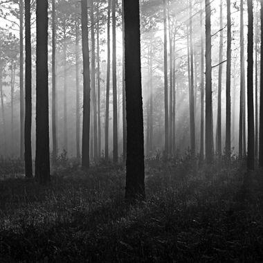 Croatan Forest, NC