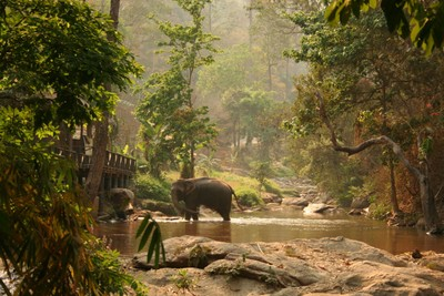 IMG_4679.JPG Jungle Elephants of Thailand