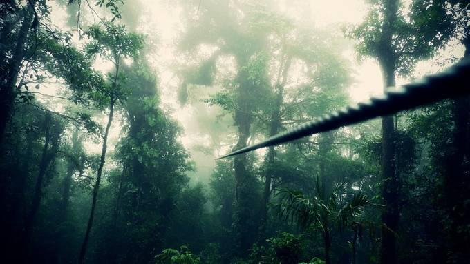zipline by sookie - Depth In Nature Photo Contest