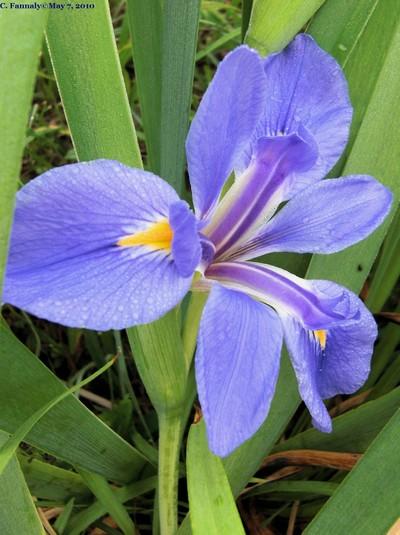 Subtle Beauty in Blue