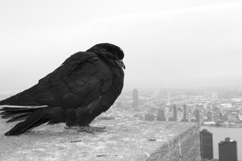 A bird on the 86th floor of the Empire State Building.