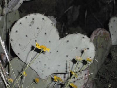 Cactus Heart. Love. It's everywhere!