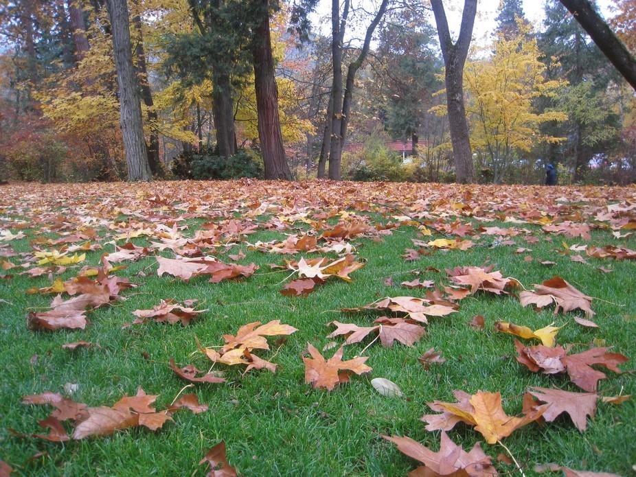 Autumn leaves 023