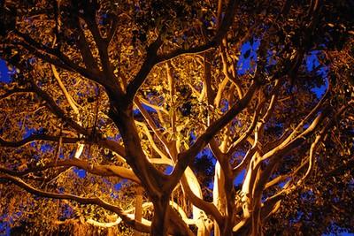 Calrsbad Tree