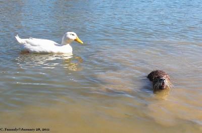 Just Swimming Around...