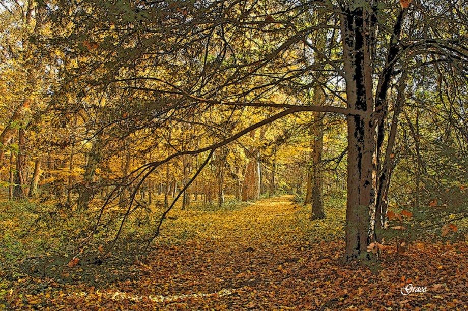 Autumn scene with lots of woods and a path.