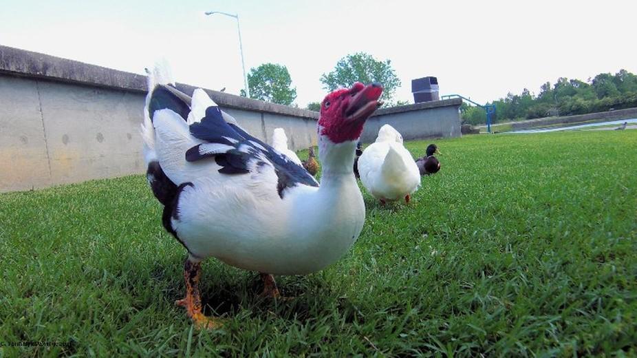 Ducks14 April 10, 2011
