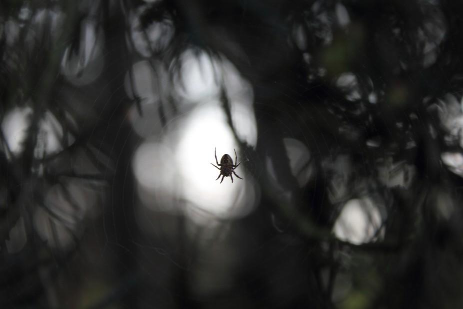 B+W spider