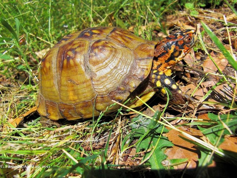 SpeedyTurtle30   April 29, 2011