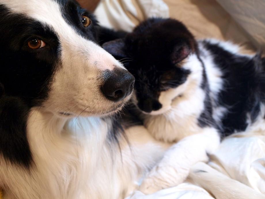 Cooper & Sylvester