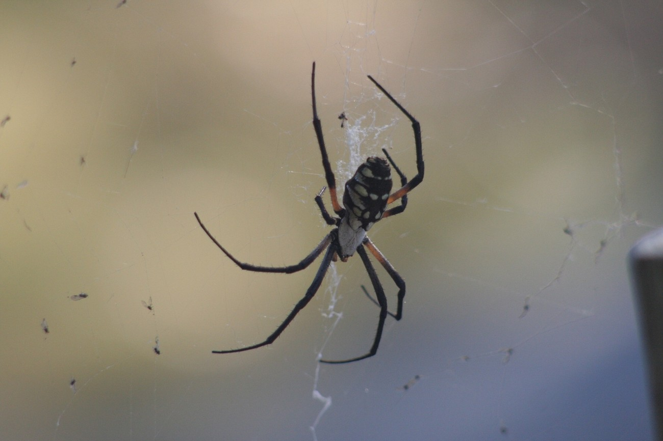 A really big spider, I don't like spiders