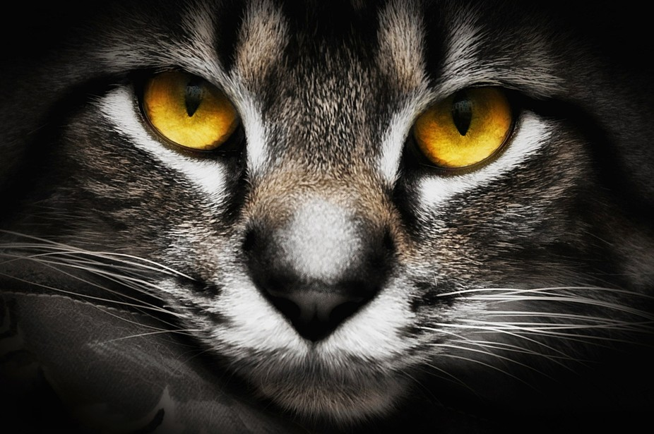 In The Eyes Of a Cat