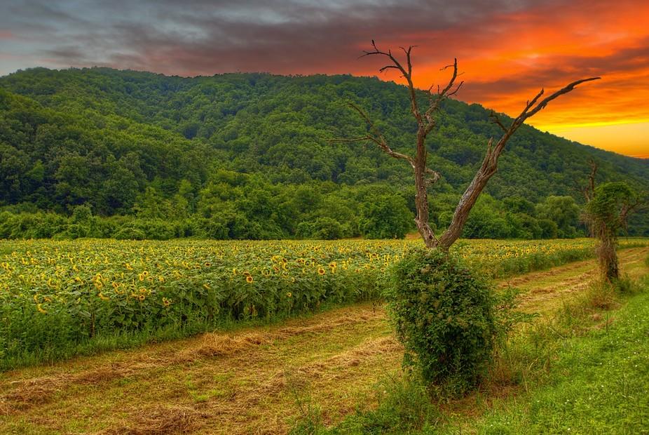 Somewhere in Slavonia, Croatia
