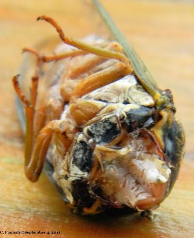 Death of a Locust
