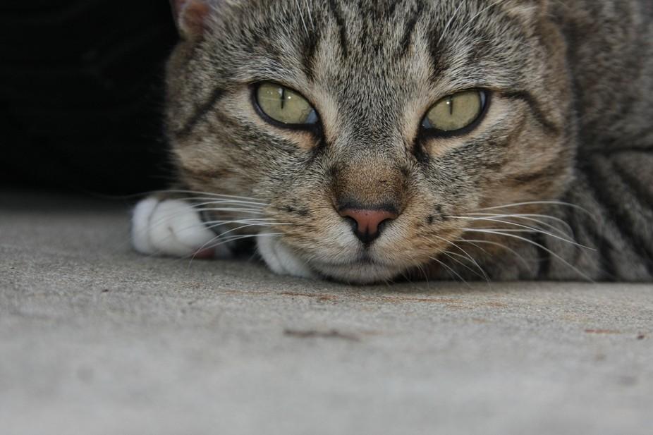 kittyonground - 2