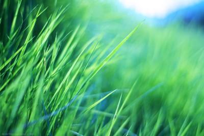 Grass Mess