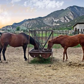 Photographed at a friend's thoroughbred horse ranch near Silt, Colorado.
