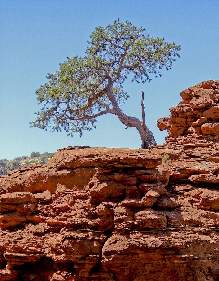 tree on rock croped