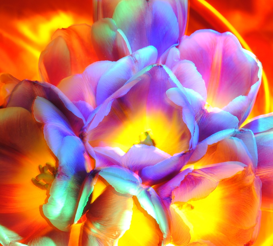 ecru is not soothing to me belongs to lightpainting flowers