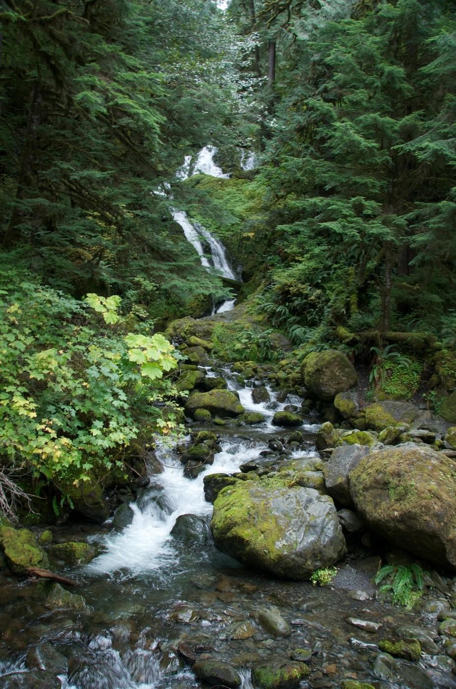 Water Fall Lake Quinault, WA