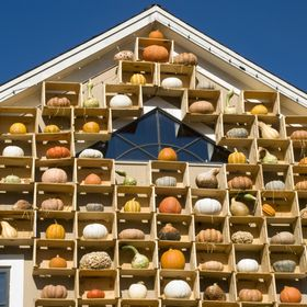 Every fall, a local farm puts up a gorgious display of gourds on the side of their store.