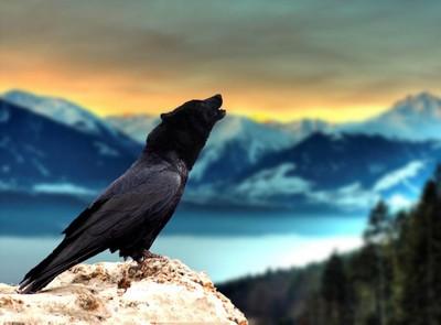 thewolfbird