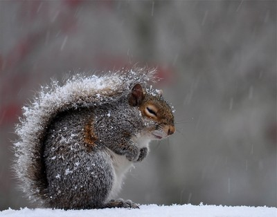 cold little guy