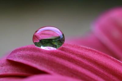 Water drop on flower...