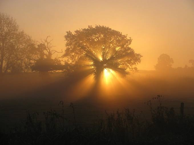 Sunburst by RobSweetman - Silhouettes Of Trees Photo Contest
