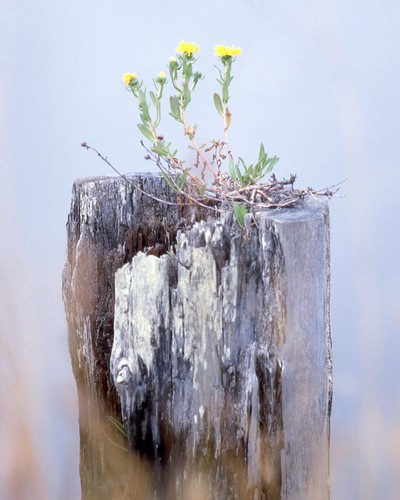 Flowered Piling