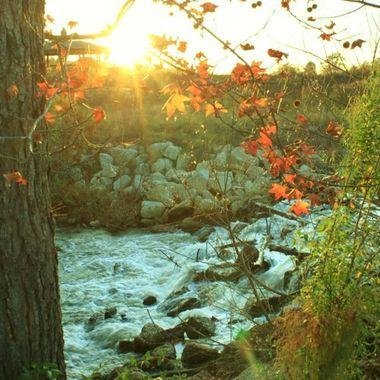 Lake francis creekside