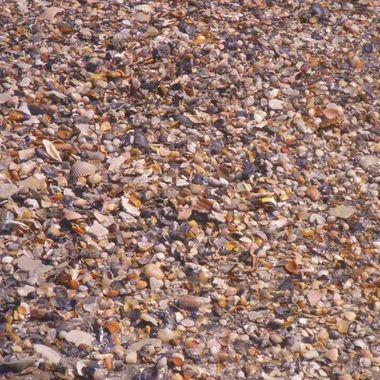shells shells and more shells