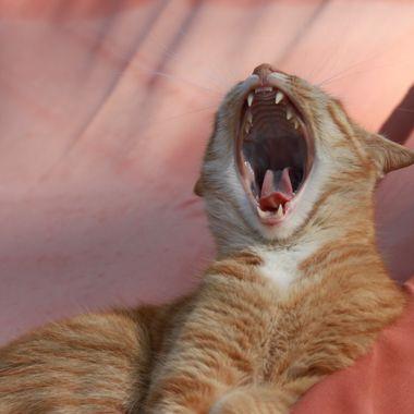 Rico roar....