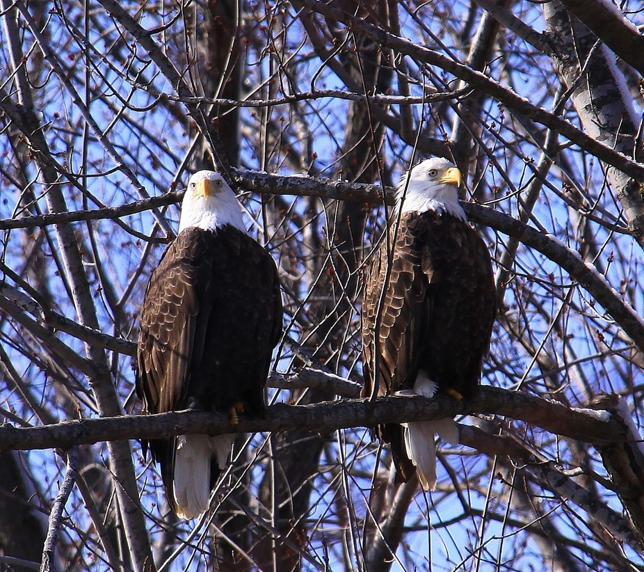 I love the chance to live close to where the eagles