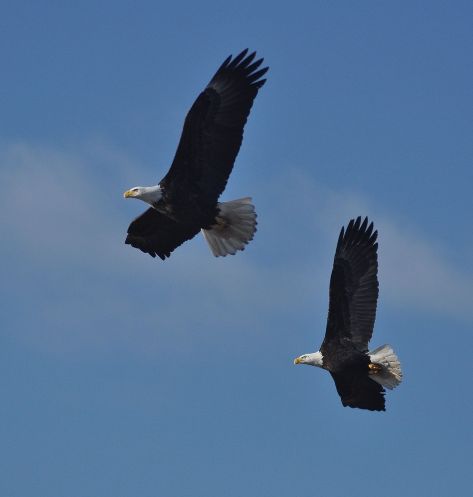 Half Wing Eagles