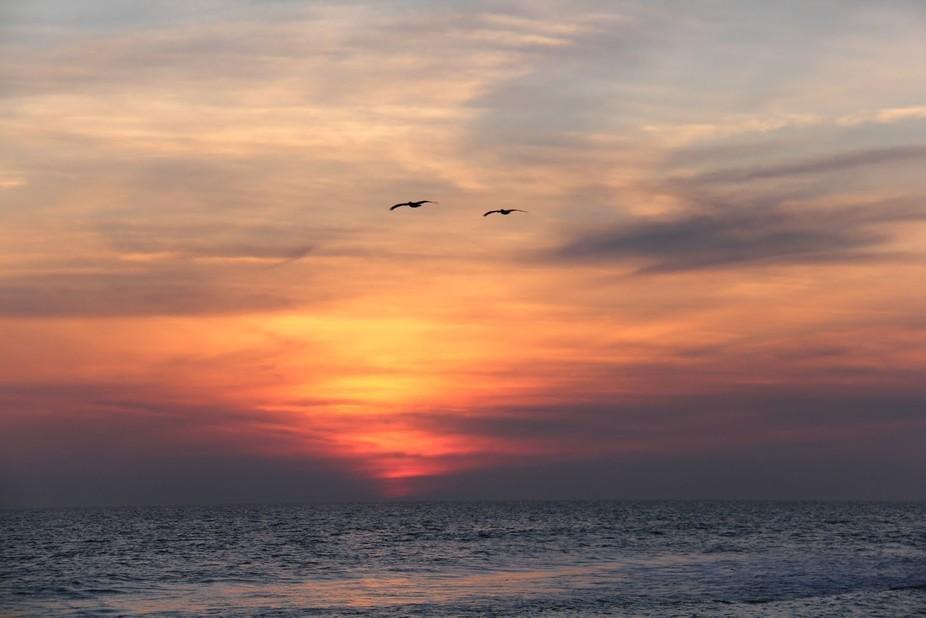 Seagulls in sunset