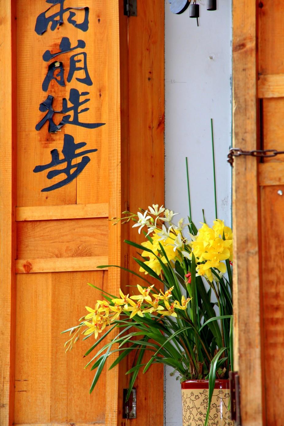 Daffodils in Lijiang