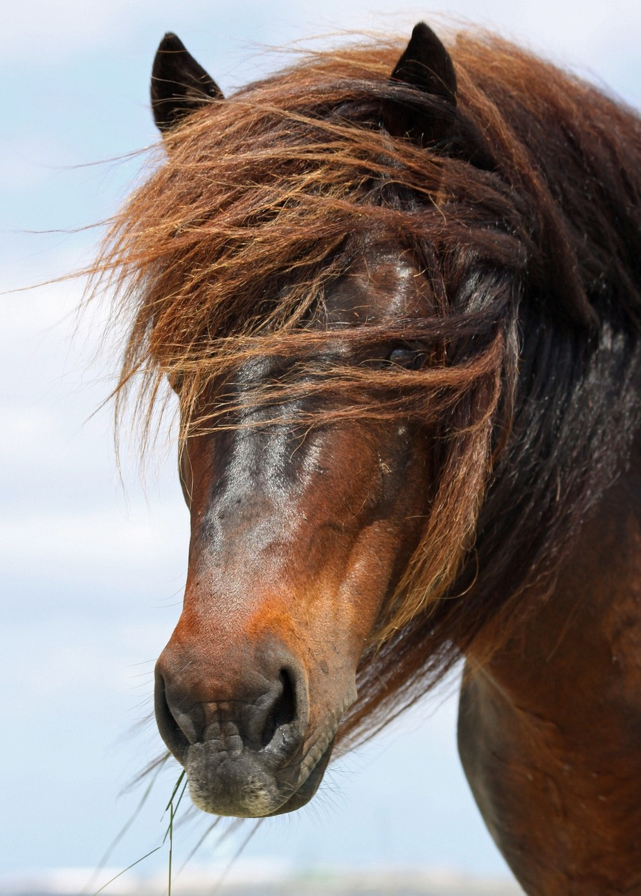 Captured this wild horse.  Time stood still.  He just stood there and posed.