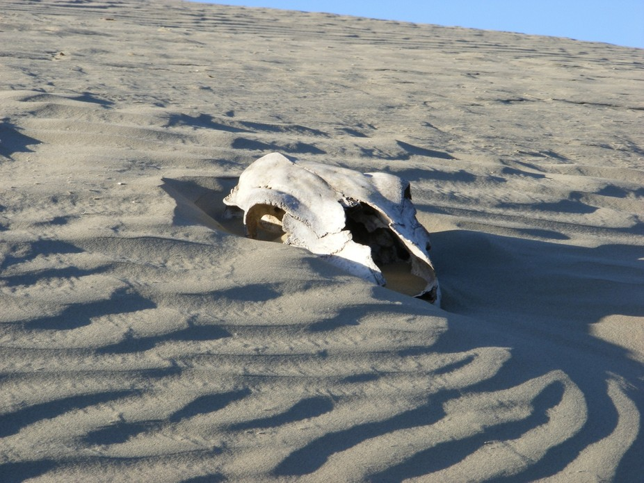 This was taken at the sand dunes in Saskatchewan. This cow skull disappeared this photo was taken...