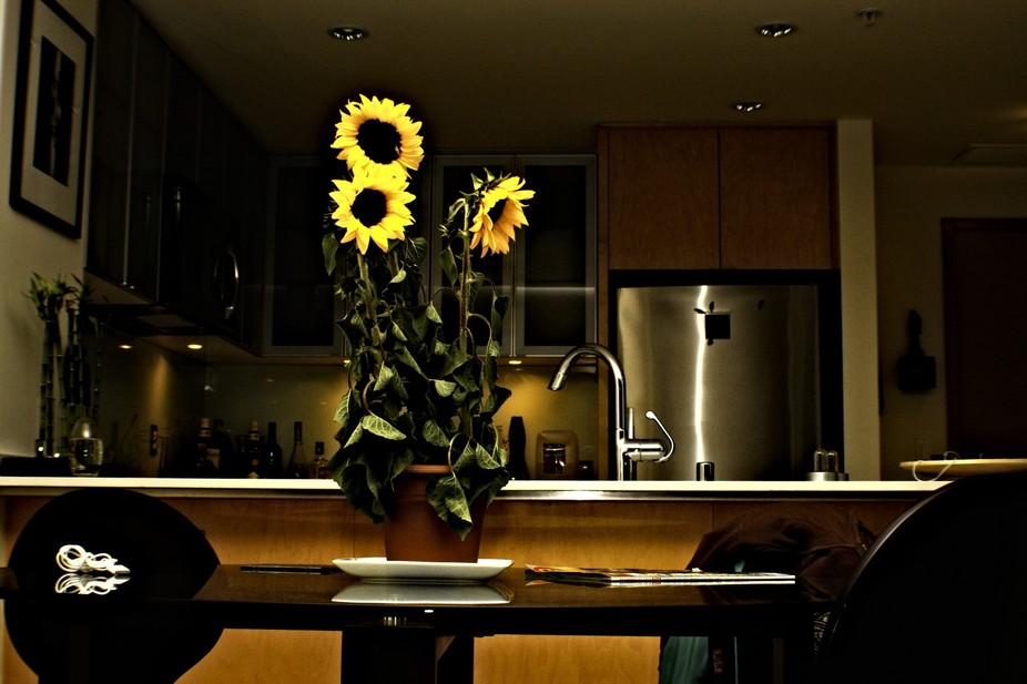 SunFlowerLomo