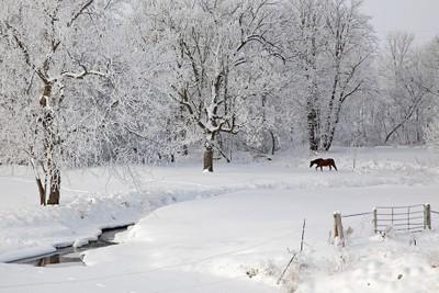 _MG_1582 frosty scene along CVNT ps