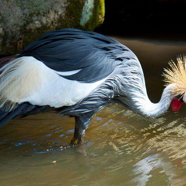 Taken at Riverbanks Zoo in Columbia, SC
