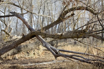 Crossed Ground-level Branches