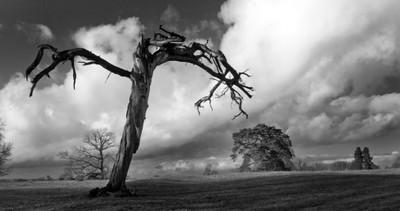 jagged old tree